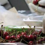SAG requerirá gran cantidad de profesionales y técnicos en inicio de temporada agrícola